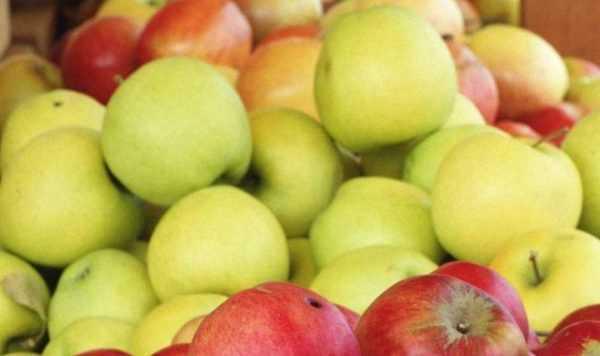 Как сделать яблочную брагу в домашних условиях