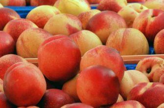 Персики для самогона