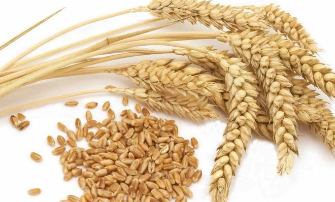 Простой рецепт пшеничного самогона в домашних условиях