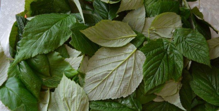 как настоять самогон на листьях малины