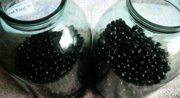 Популярные рецепты настоек самогона на черной рябине