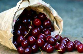Как приготовить брагу из вишни
