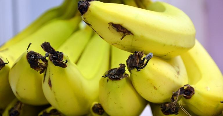 Существует более пятисот различных сортов банана