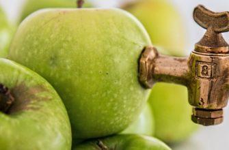 Брага из сока яблок