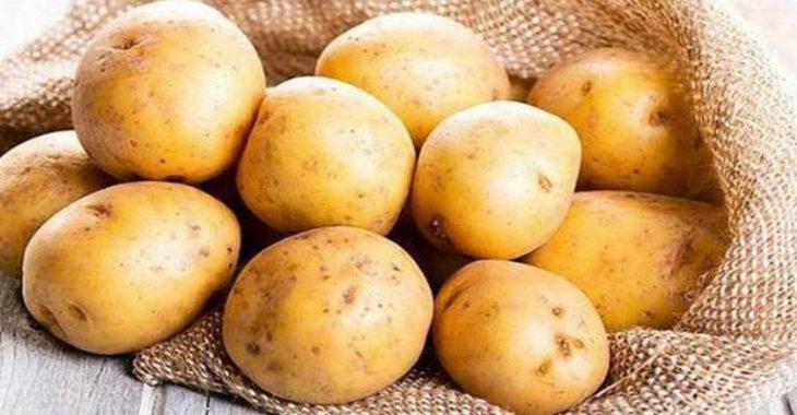 Картофель для самогона