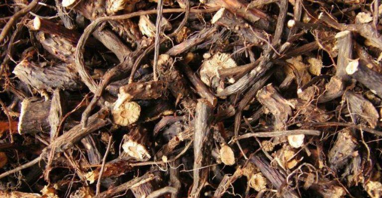 Настойка из корней шиповника